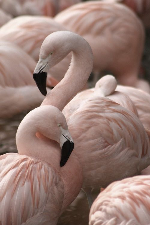 pastel-flamingo