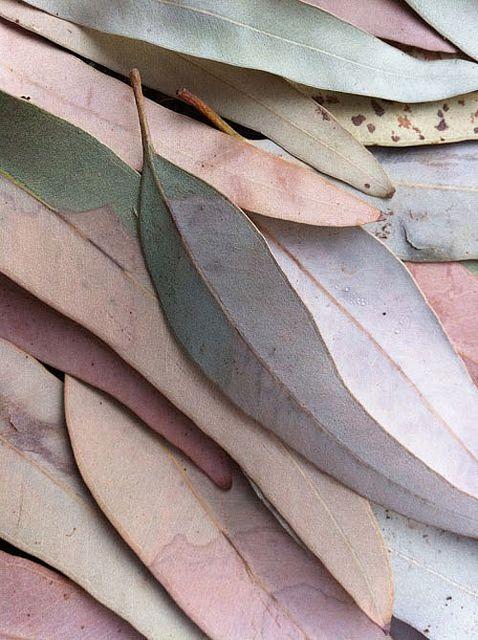 pastel-leaves