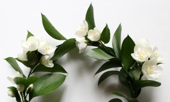 couronne-de-fleurs-jasmin-3